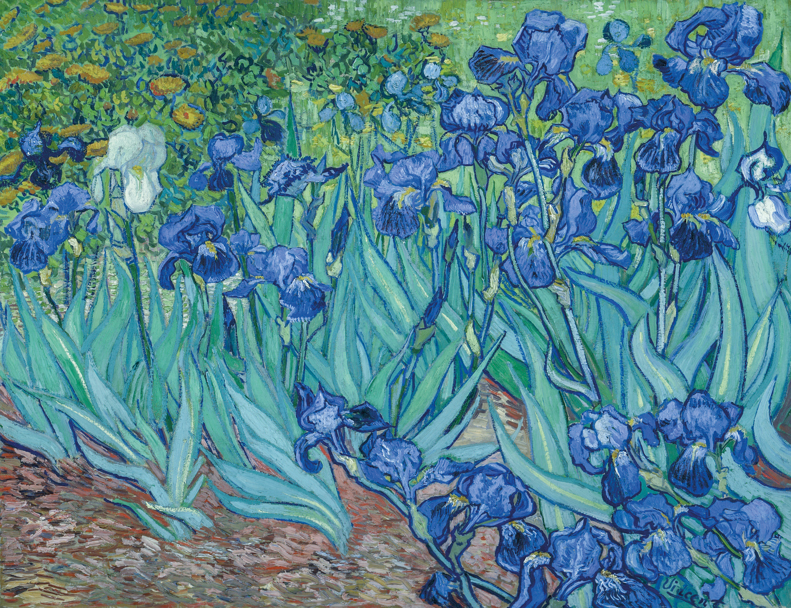 Irises by Vincent van Gogh 1889