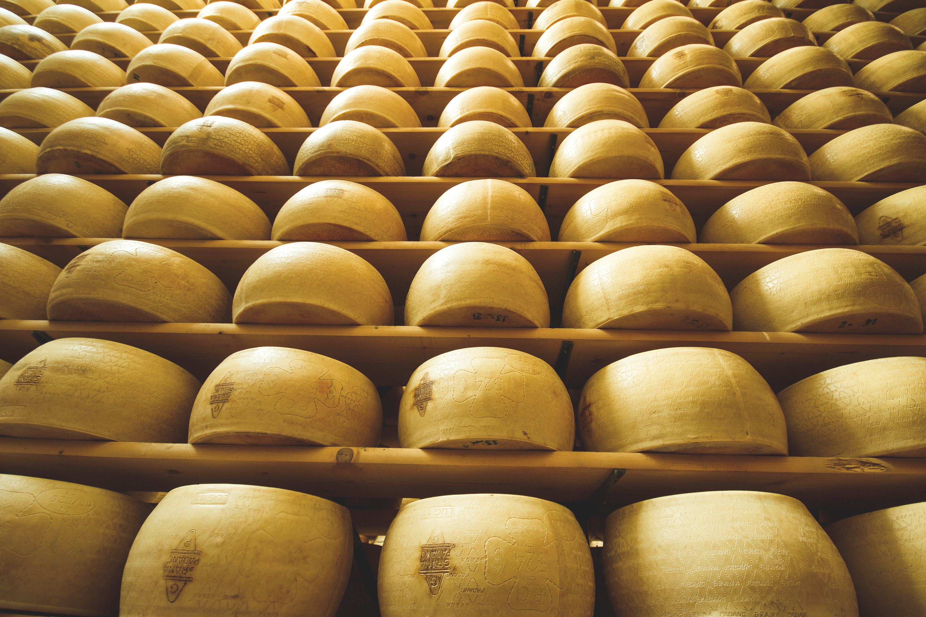 Vertical view of freshly made wheels of cheese